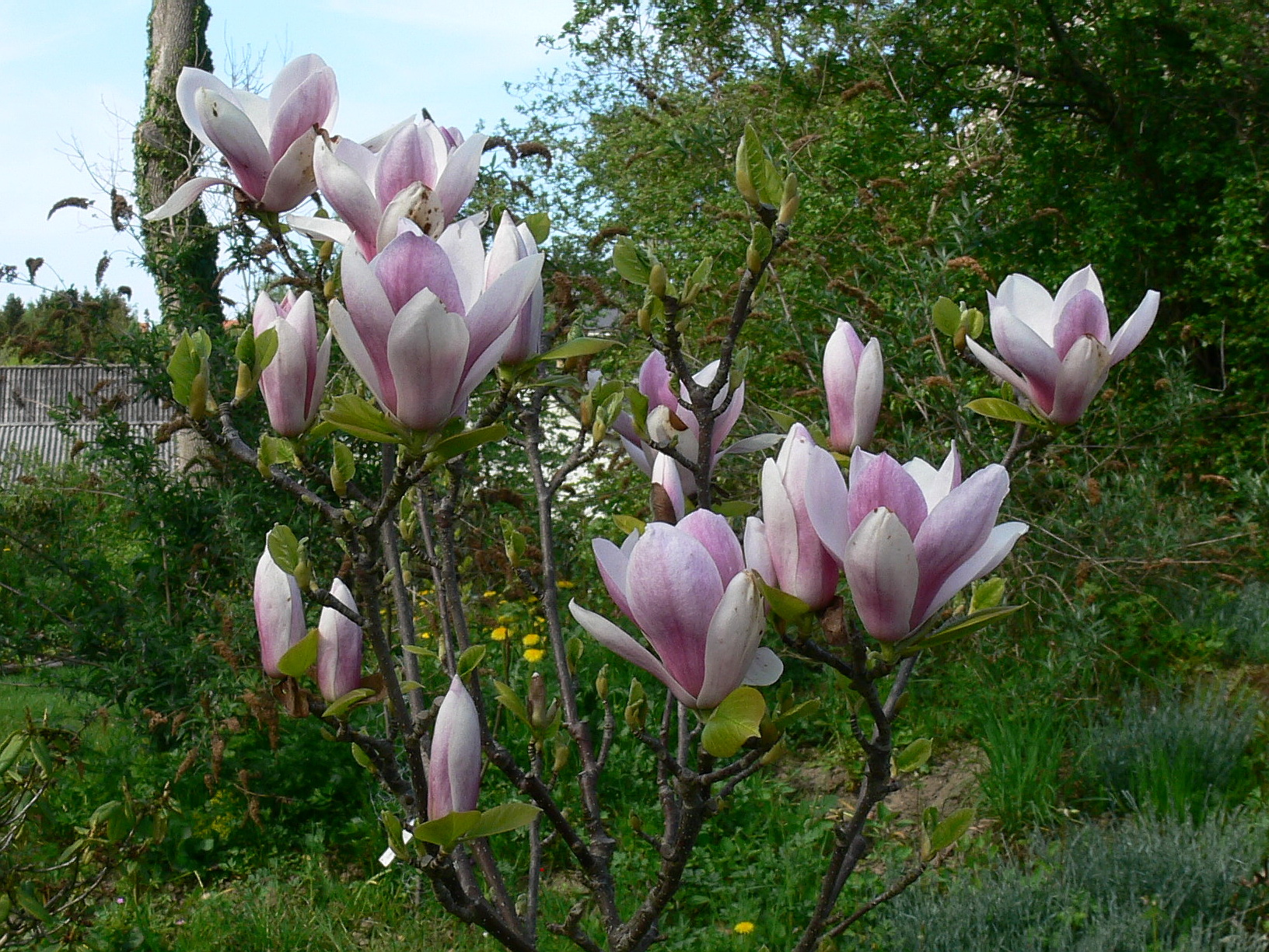 magnolie satisfaction magnolia 39 satisfaction 39. Black Bedroom Furniture Sets. Home Design Ideas